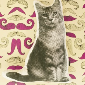 Produkte van die dag: Die kat sesnor